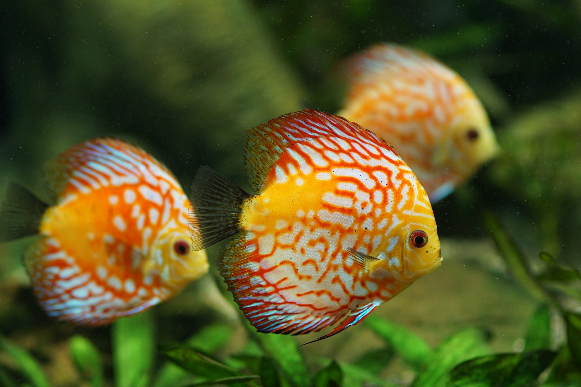 advantages of fishkeeping